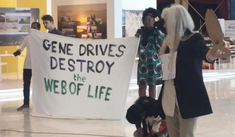Resultado de imagen para impulsores genéticos ( gene drives)